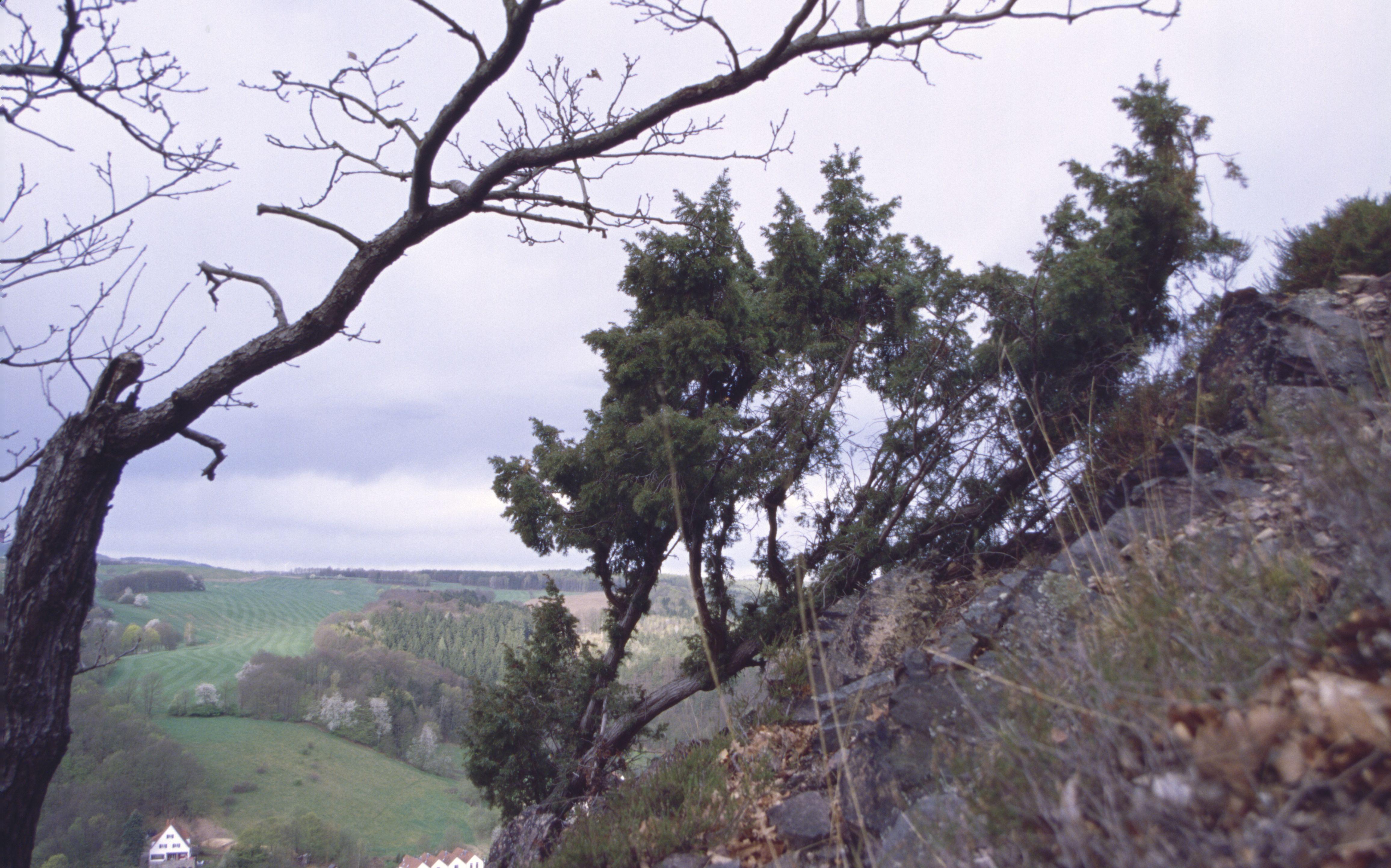 NSG Müglitzhang bei Schlottwitz - Natur im Osterzgebirge
